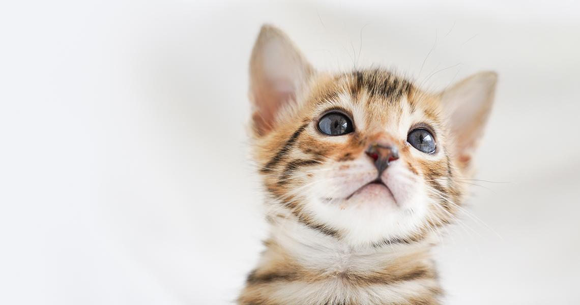 仔猫ブリーダー撮影