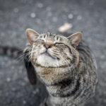 36カメラ猫写真無料ダウンロード2020.02.05