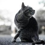 36カメラ猫写真無料ダウンロード2020.02.24