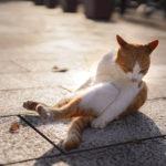 36カメラ猫写真無料ダウンロード2020.02.06