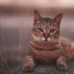 36カメラ猫写真無料ダウンロード2020.02.21