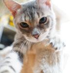 36カメラ猫写真無料ダウンロード2020.01.17