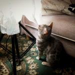 36カメラ猫写真無料ダウンロード2020.01.20