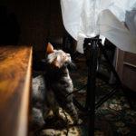 36カメラ猫写真無料ダウンロード2020.01.16