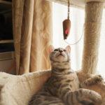 36カメラ猫写真無料ダウンロード2020.01.19
