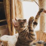 36カメラ猫写真無料ダウンロード2020.01.30