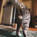 36カメラ猫写真無料ダウンロード2020.01.22