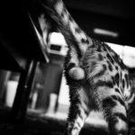 36カメラ猫写真無料ダウンロード2020.01.24
