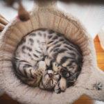 36カメラ猫写真無料ダウンロード2020.02.12