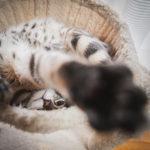 36カメラ猫写真無料ダウンロード2020.02.15