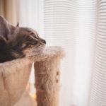36カメラ猫写真無料ダウンロード2020.02.17