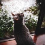 36カメラ猫写真無料ダウンロード2020.02.18