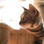 36カメラ猫写真無料ダウンロード2020.02.27