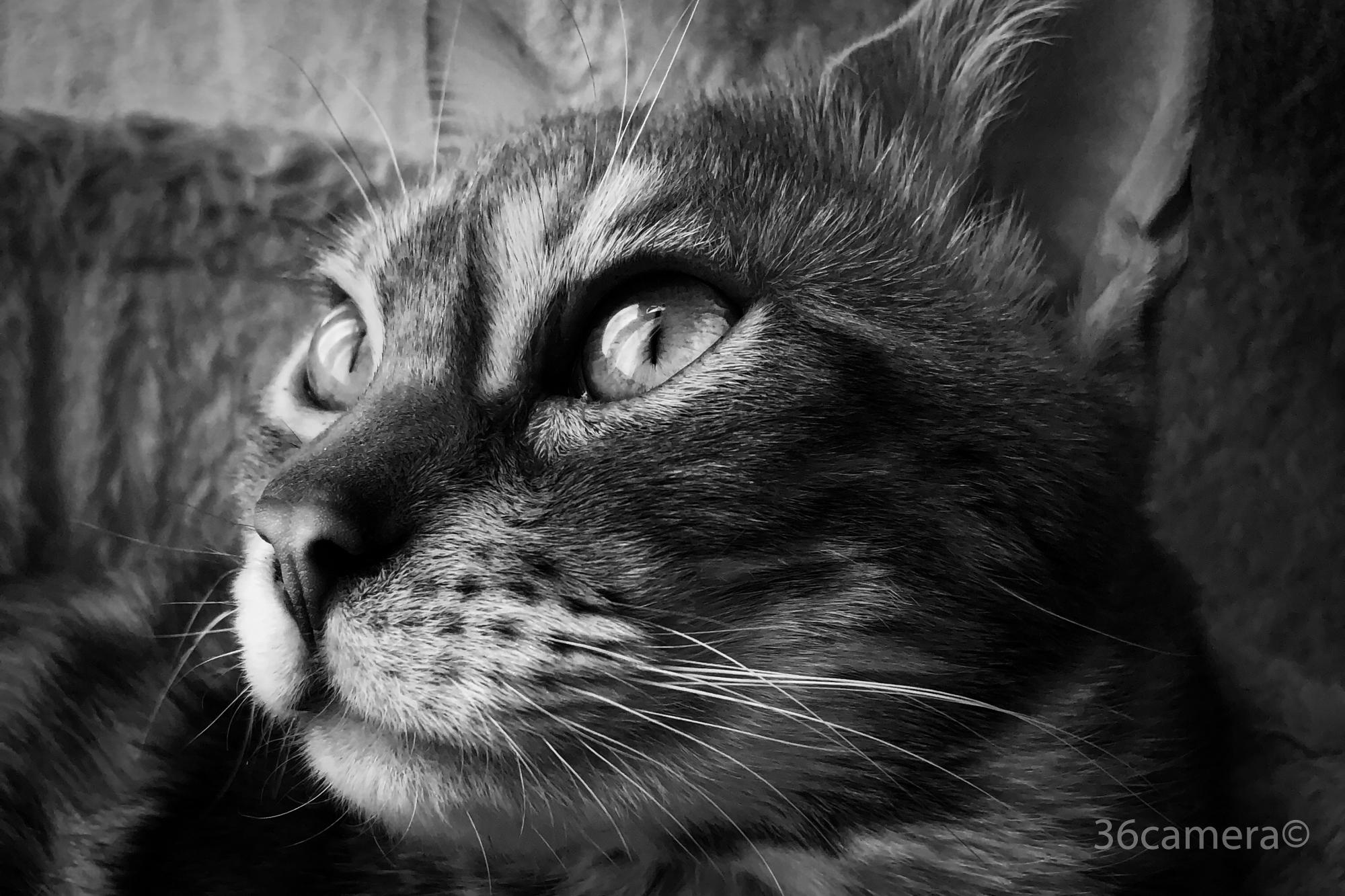 iPhone猫写真 36カメラ