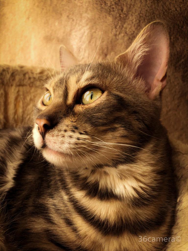 iPhone8 猫写真撮影 36カメラ