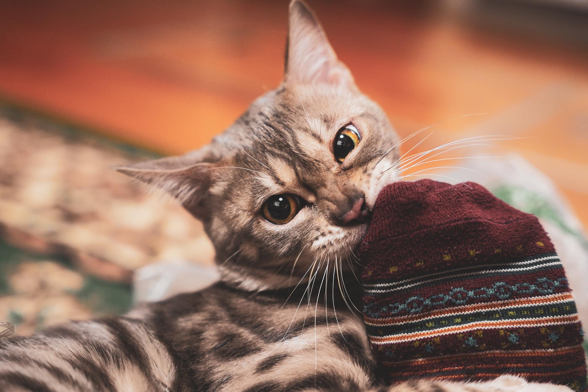 36カメラ猫写真無料ダウンロード2020.03.03