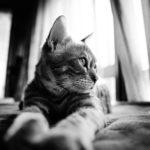 36カメラ猫写真無料ダウンロード2020.03.06