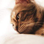 36カメラ猫写真無料ダウンロード2020.03.05