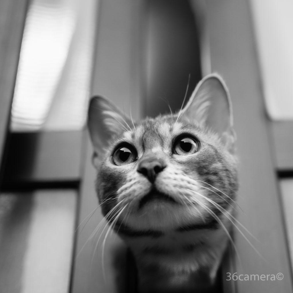 36カメラ 猫写真