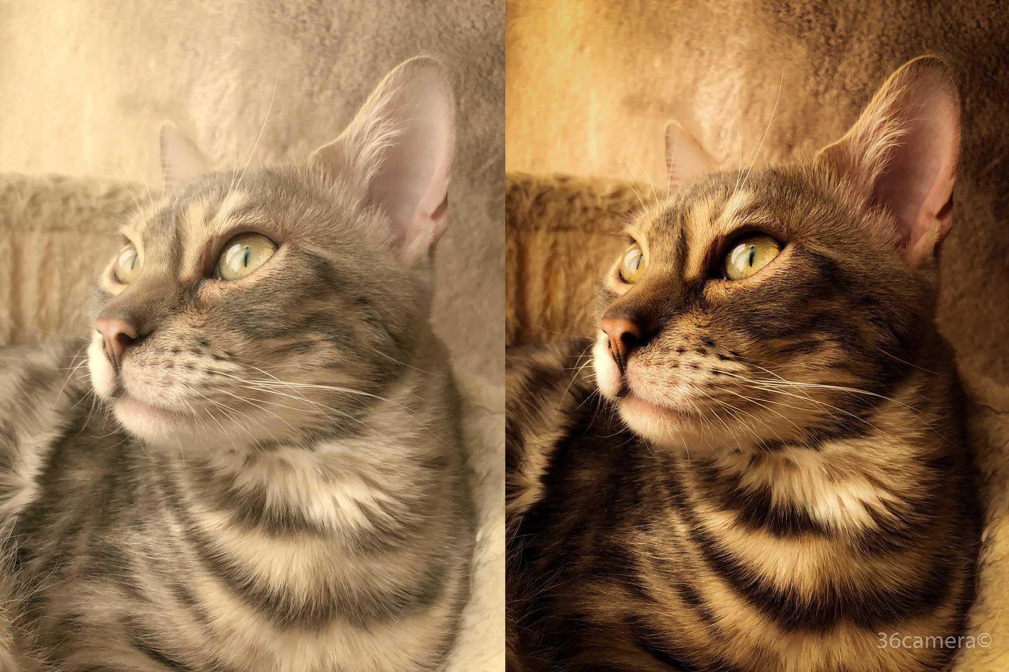 36カメラ猫写真撮り方-現像
