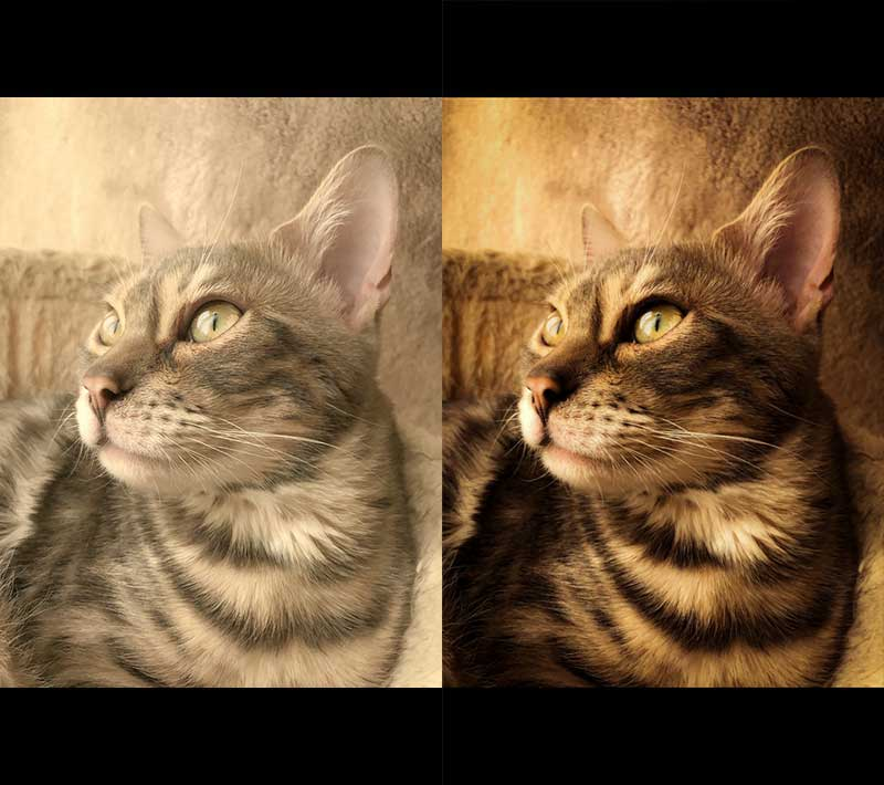 Adobe-Lightroomモバイル無料版現像6