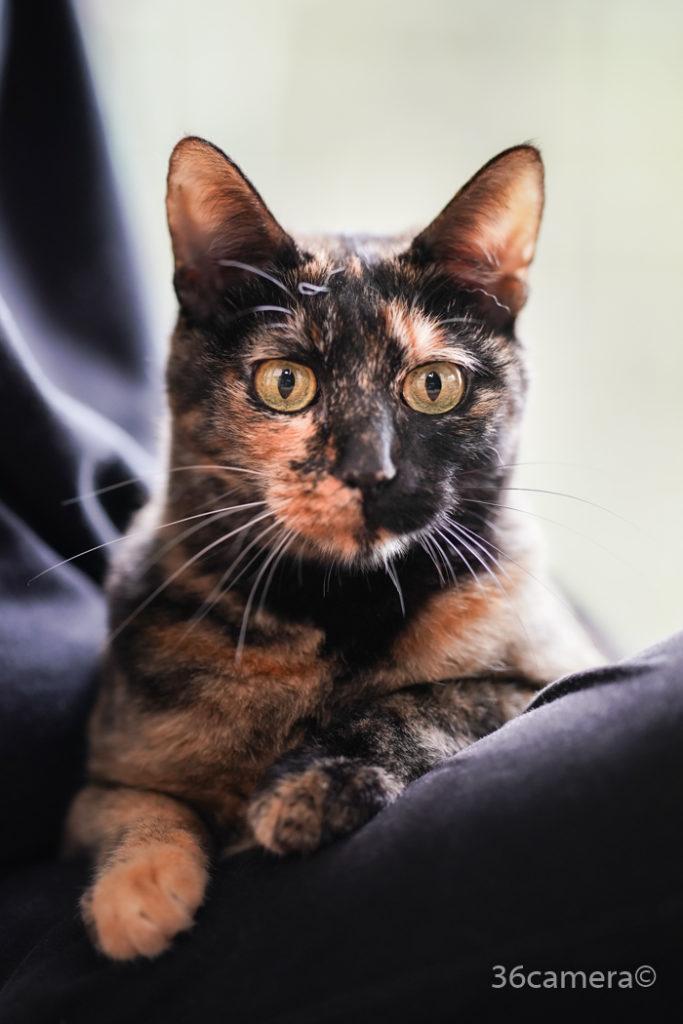 動物福祉 保護猫