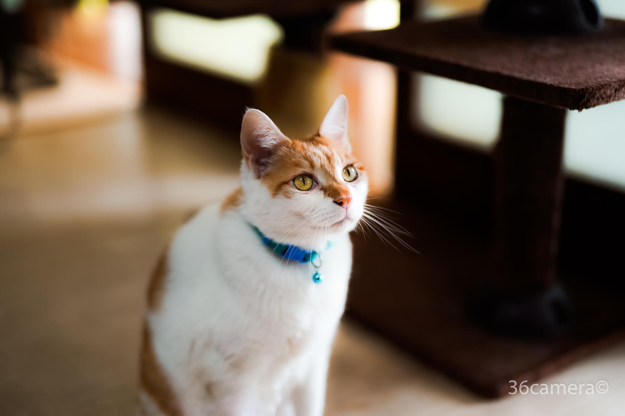 保護猫の出張撮影