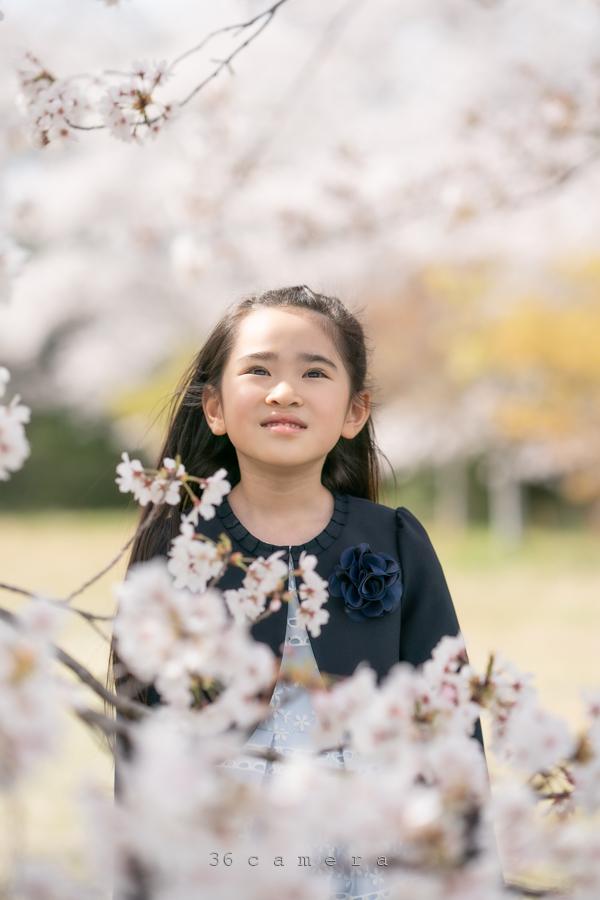 子どもと桜 ロケーション撮影福岡