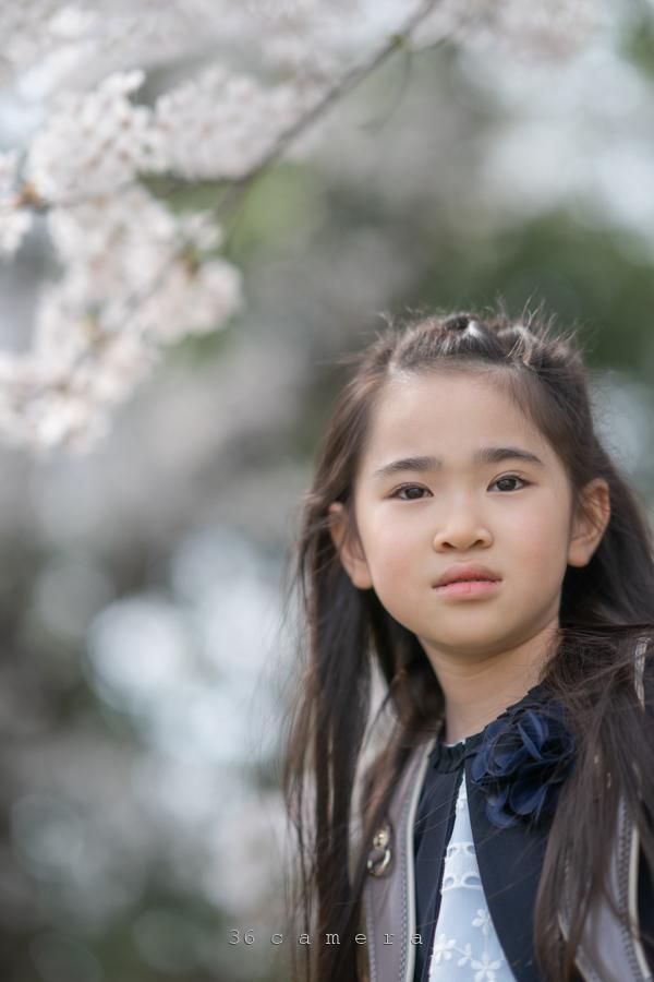 子どもと桜 出張撮影36カメラ