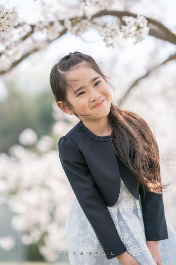 ロケーション撮影福岡 桜と子ども