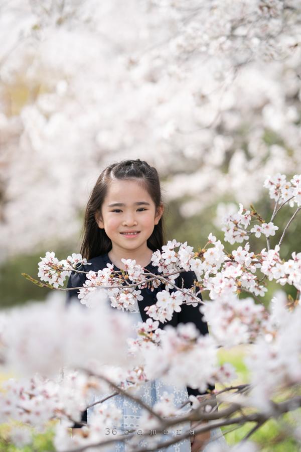 桜ロケーション撮影 福岡36カメラ